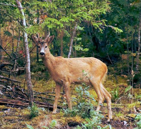 Wild Forest by Samuel Sam